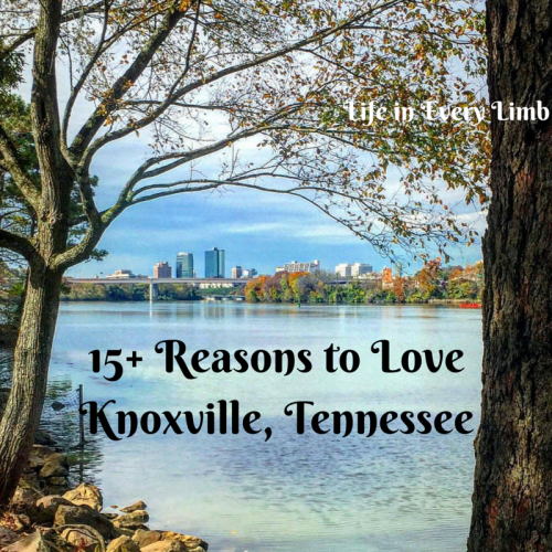 15+ Reasons to Love Knoxville, Tennessee