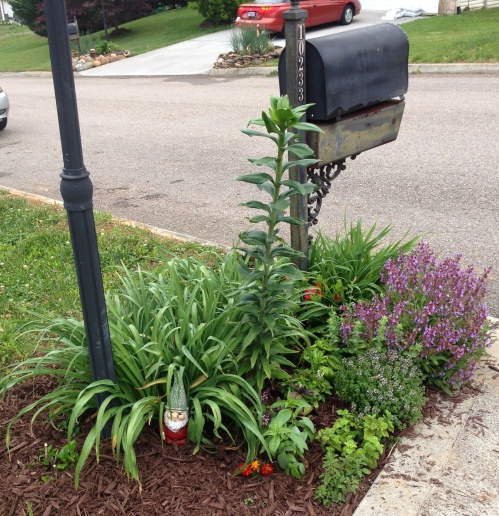 Mailbox Herb Garden earlier this year