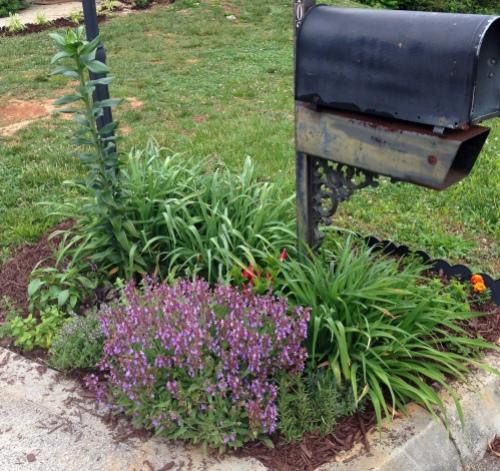 Mailbox Garden 2