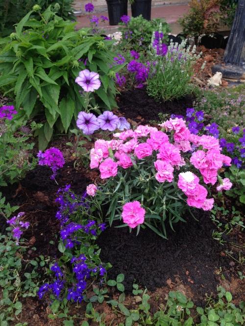 purple garden 2