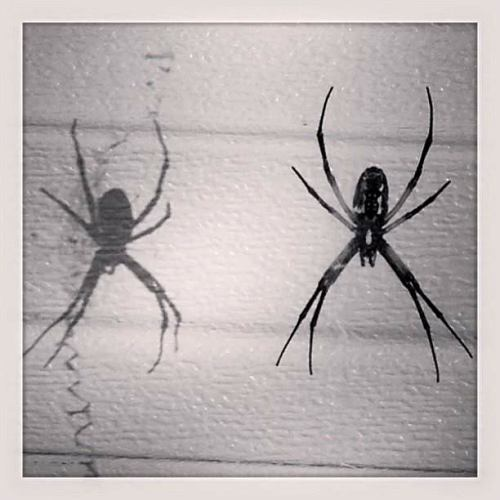 Spider and shadow
