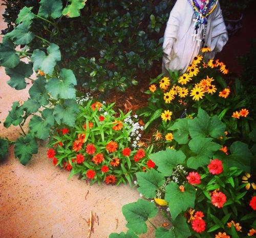 garden volunteer 2