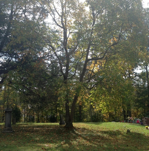 Branch Hill 16