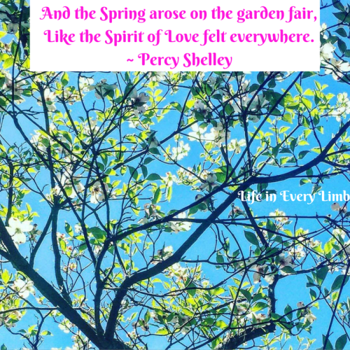 and-the-spring-arose-on-the-garden-fairlike-the-spirit-of-love-felt-everywhere