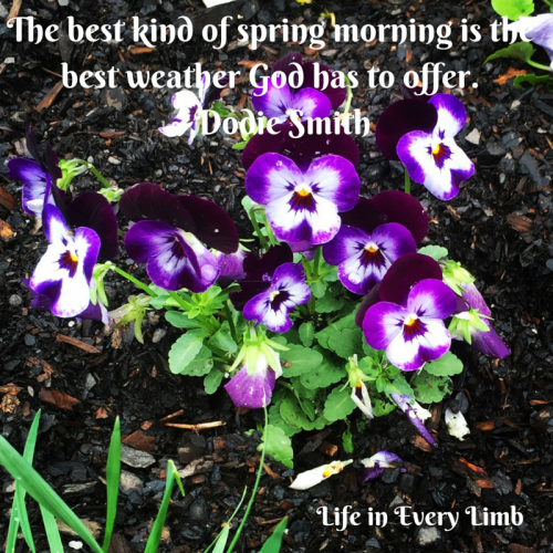 the-best-kind-of-spring-morning-is-the-best-weather-god-has-to-offer-dodie-smith