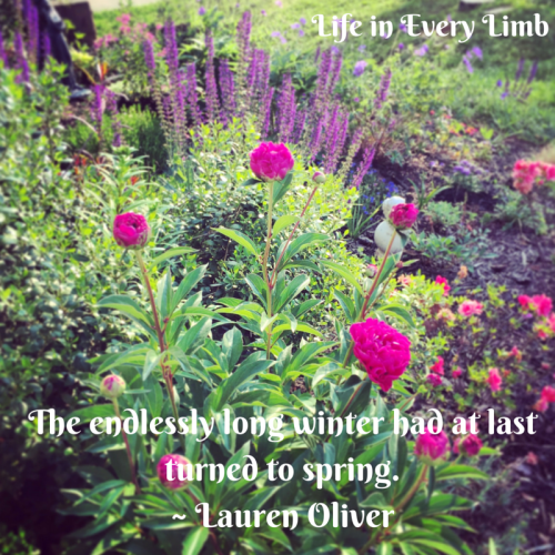 the-endlessly-long-winter-had-at-last-turned-to-spring-lauren-oliver