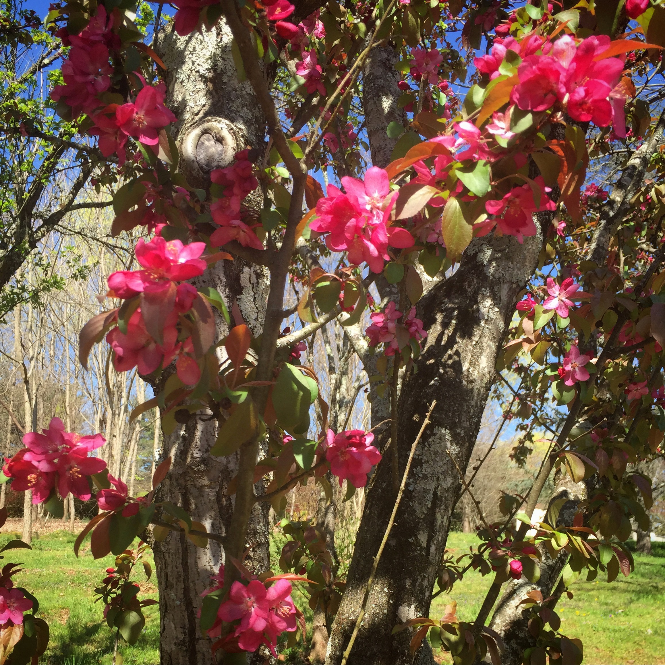 Walking in East Knoxville: Welcoming Spring at the Knoxville ...