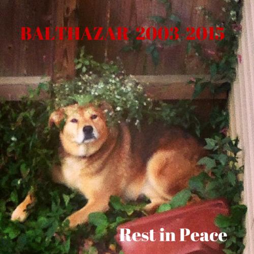 RIP Balthazar