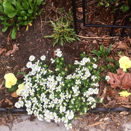 garden 2015 1