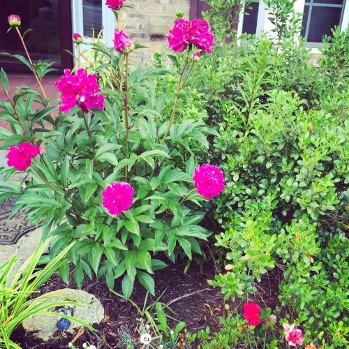 garden 31