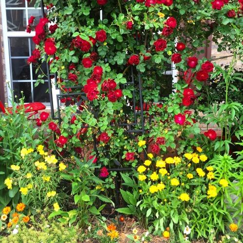 garden 32