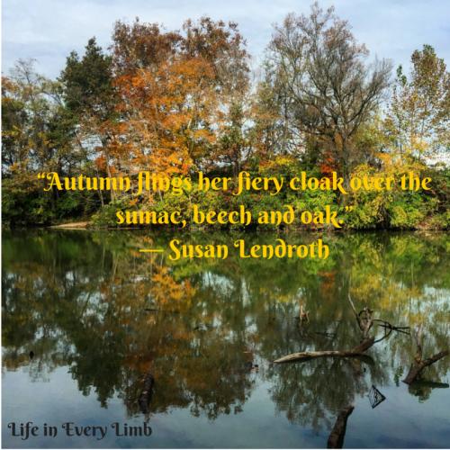 """Autumn flings her fiery cloak over the sumac, beech and oak."" ― Susan Lendroth"
