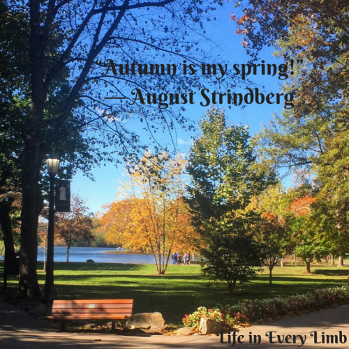 """Autumn is my spring!"" ― August Strindberg"
