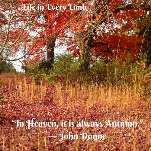 """""""In Heaven, it is always Autumn-."""" ― John Donne"""
