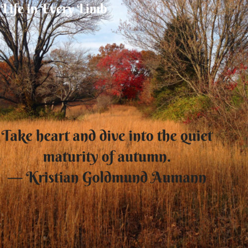 """Take heart and dive into the quiet maturity of autumn."" ― Kristian Goldmund Aumann"