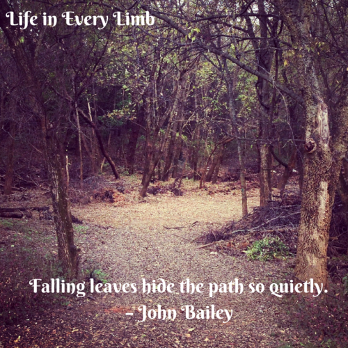 Falling leaves hide the path so quietly. – John Bailey