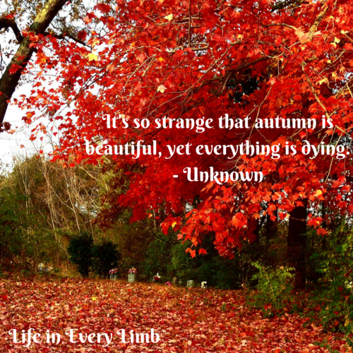 It's so strange that autumn is beautiful, yet everything is dying.- Unknown