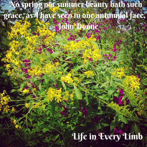 No spring nor summer beauty hath such grace, as I have seen in one autumnal face. - John Donne