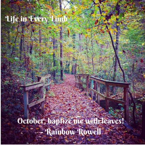 October, baptize me with leaves!- Rainbow Rowell