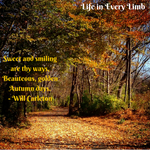 Sweet and smiling are thy ways,Beauteous, golden Autumn days.- Will Carleton
