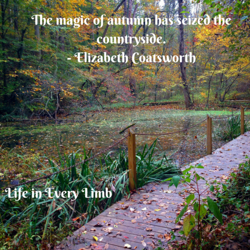 The magic of autumn has seized the countryside.- Elizabeth Coatsworth