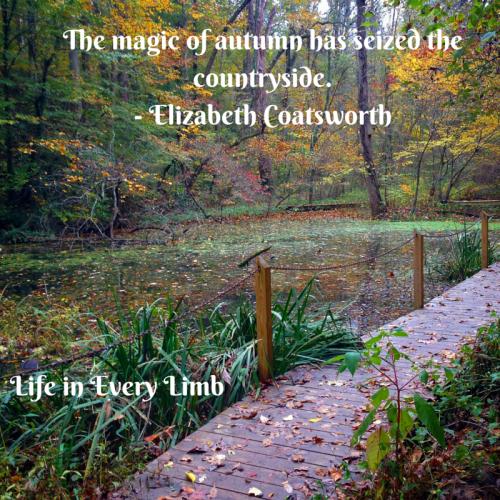 The magic of autumn has seized the countryside.- Elizabeth Coatsworth
