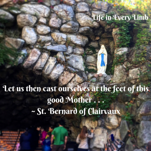 Let us then cast ourselves at the feet of this good Mother . . .- St. Bernard of Clairvaux